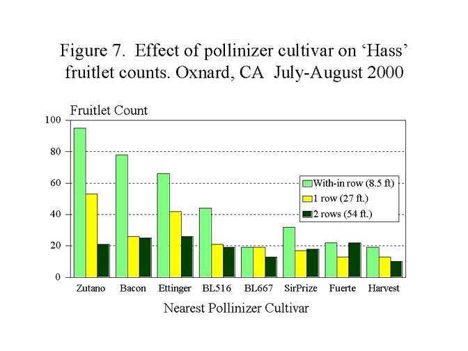 Figure #7 Effect of pollinizer