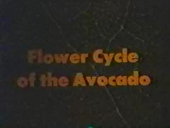 Large Flower Cycle movie